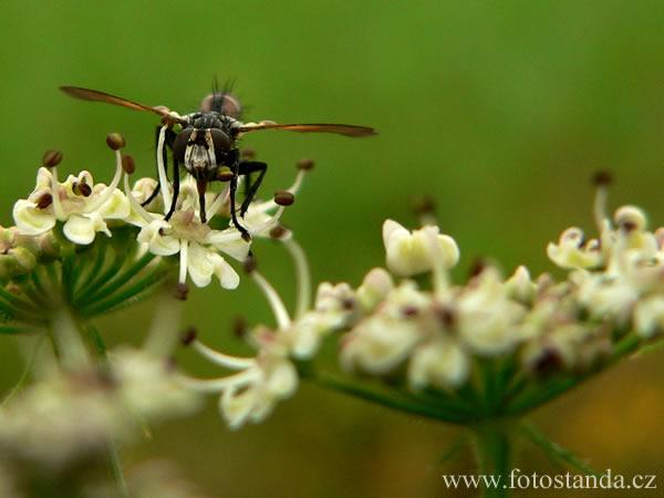 Moucha z podhledu